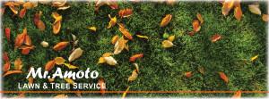 Mr. Amoto Lawn & Tree Service