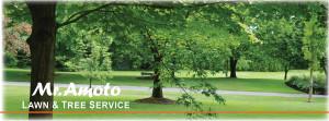 Mr Amoto Lawn & Tree Service